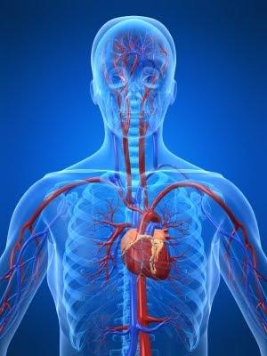 Endocardite bacteriana mata